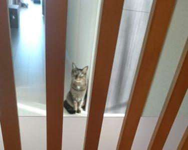 完全室内飼いなら猫扉は重要です!脱走で悲しい思いをしないために