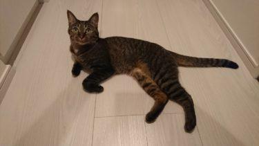 猫アレルギーの対策はしていますか。ずっと一緒にいるための予防策