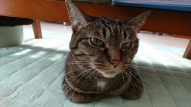 猫の抗議行動は何故起きる?抗議の種類から要求を理解する