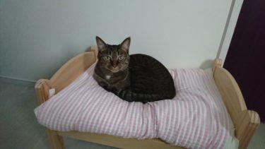 寝ている場所で気持ちが違う?猫の寝ている場所から気づくこと