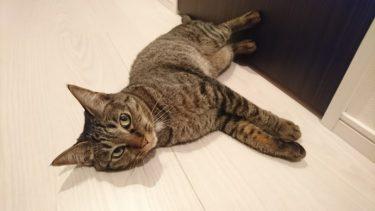 猫の虫よけ対策は万全ですか?虫刺されを防ぐために出来ること