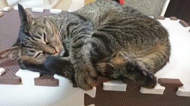 猫の体調管理と日常のケアで気を付けているポイント