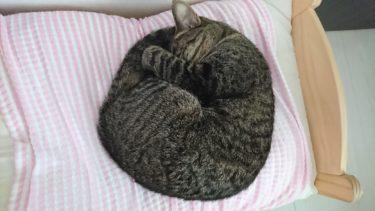 寒がりな猫のための防寒対策と冷気を防ぐおすすめのグッズ紹介
