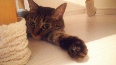 我が家の猫を紹介します