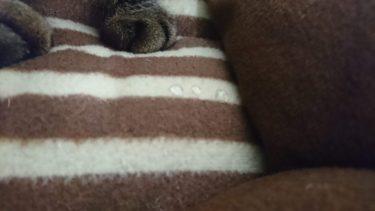 猫がよだれを垂らす瞬間に遭遇して猫も飼い主も幸福度アップ