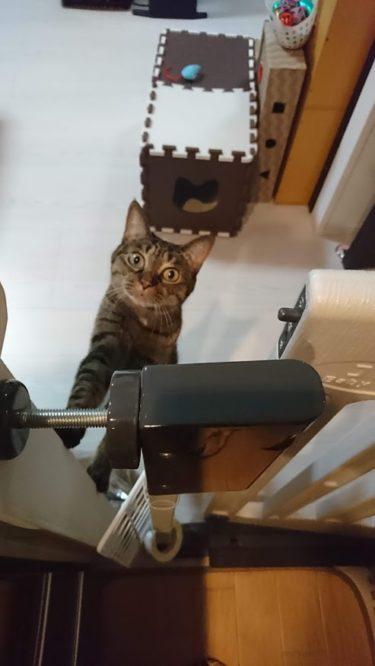 猫がいたずらするのはどんな時?猫からのメッセージがあります