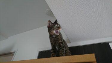 猫がパニックになった時に飼い主がとるべき対処法は?