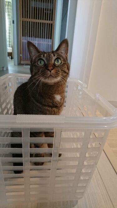 子猫時代には制限していた場所を成猫になって解禁してみたら・・